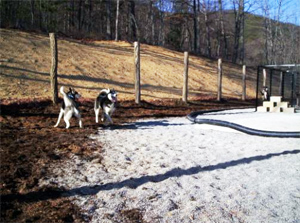 peaceful haven farm doggie playground